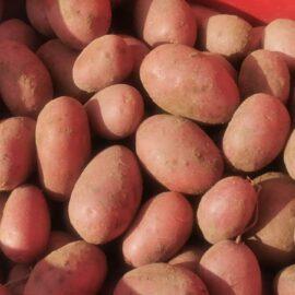 Patate Rosse di Montereale 1kg